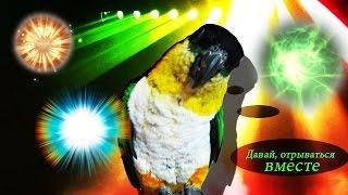 Попугай, который недавно вернулся из Ибицы