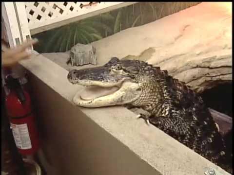 CrocTalk in Kelowna BC on CHBC News