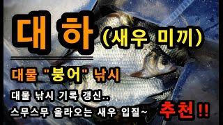 [추천]_ 대물낚시 새우 미끼 / 대물붕어 대하(새우)…