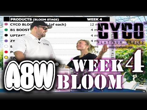 A8W Cyco Nutrients WK 4 Bloom Feed Chart How to SE1EP7 (Official