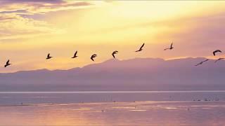 Lizer -  Птицы улетают на юг   Клип 2018