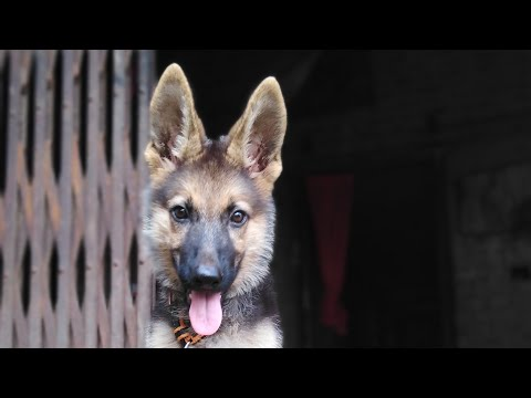 hqdefault - How To Train Your Dog SIT Dog Training Videos