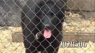Приют «Рембо» заботятся о животных