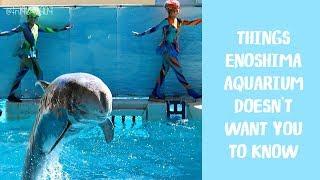 Why You Shouldn't Go To Enoshima Aquarium