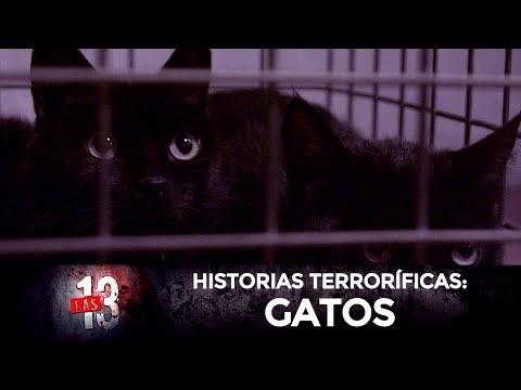 Las 13: Gatos | Serie web de terror | T2:E4