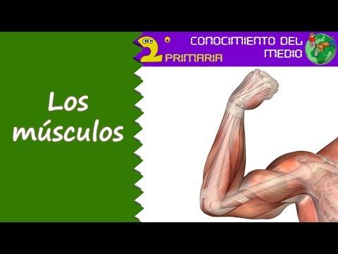 Cono, 2º Primaria. Tema 1. Los músculos - YouTube