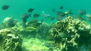 The Amazing Underwater World of Bocas del Toro, Panama