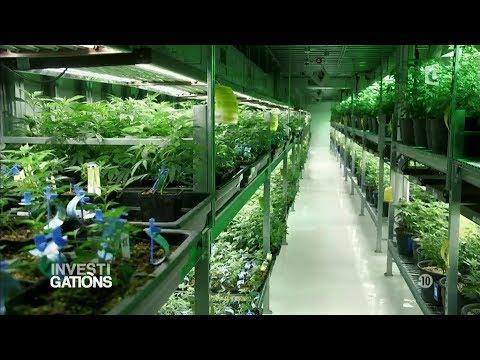 Investigations - Le business de la drogue
