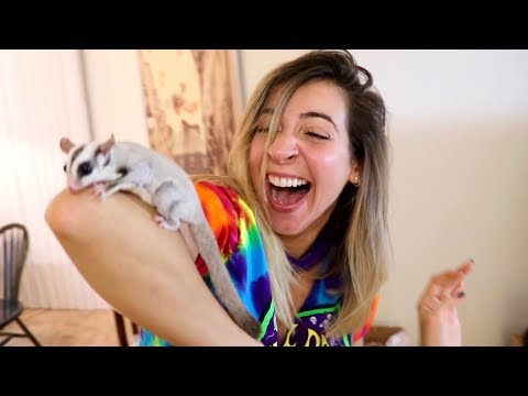 Thumbnail: SURPRISING HER WITH BABY SUGAR GLIDER!!