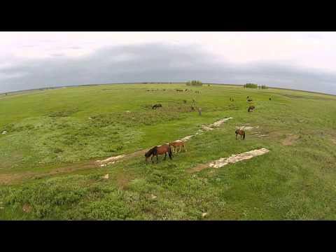 Лошади. Вдали от городской суеты. Астана. Horses. Away from the bustle of the city.
