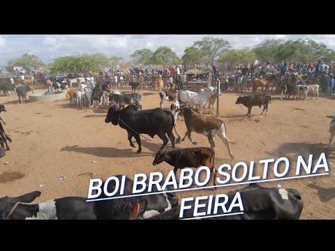 #03 FEIRA DE GADO DE CACHOEIRINHA /PE!! DIA 16/01/2020
