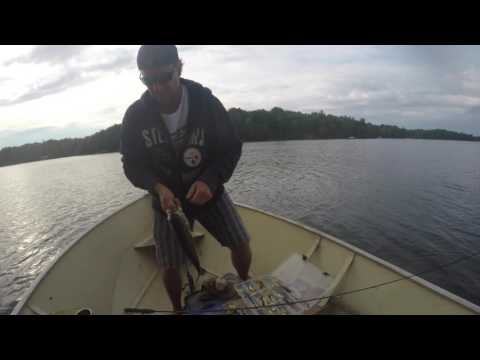 Upper Rideau Lake Large Mouth Bass