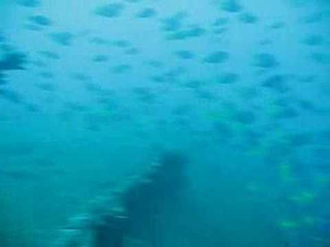 Diving on the USS President Coolidge, Santo, Vanuatu