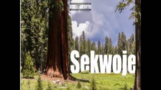 Sekwoje- 11 rzeczy których nie wiesz o największych drzewach świata