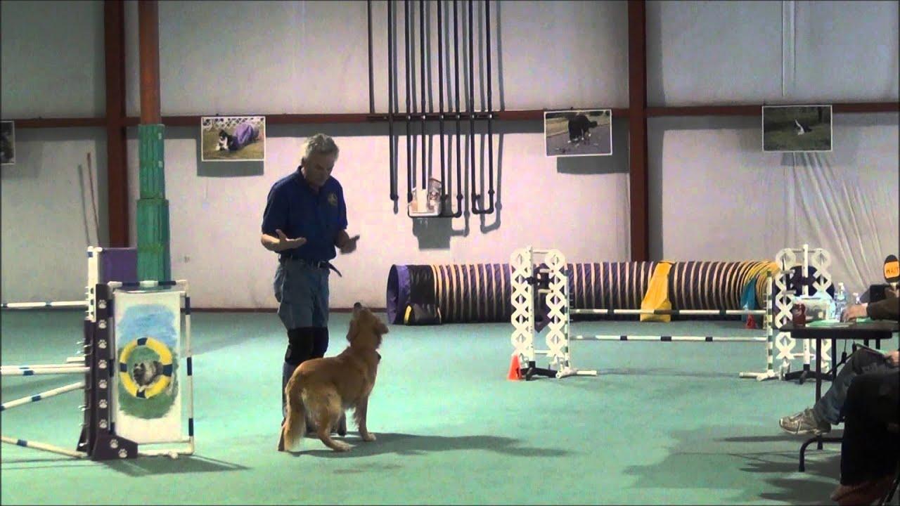 car dun al dog training