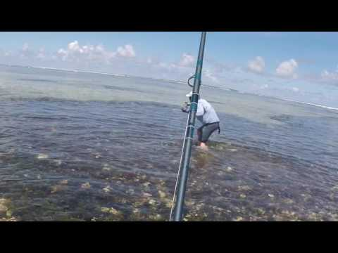 Fly Fishing for GTs - Cosmoledo Atoll, Seychelles Islands - Amazingly Guided!!!