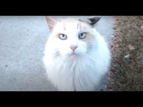 Friendly Cat.