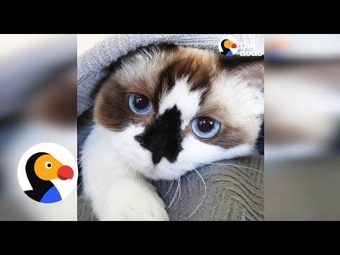 Tiny Cat Has Huge Personality | The Dodo