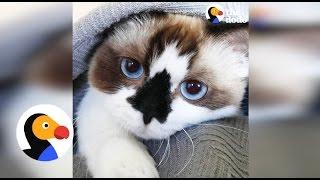 Tiny Cat Has Huge Personality   The Dodo