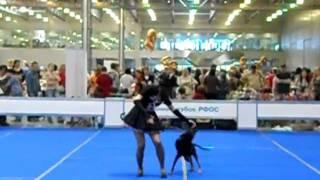 Танцы с собаками. Березкина Анастасия и Пифагор.(, 2011-05-23T05:35:17.000Z)
