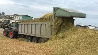 Уборка кукурузы на силос. Крестьянское хозяйство Михаила Шруба