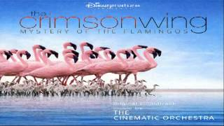 The Crimson Wing: Mystery of the Flamingos : The Transformation