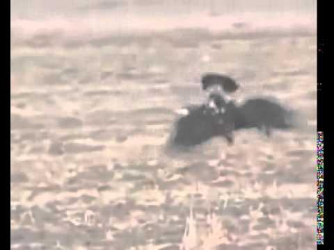 Deer Hunting HAWK Hunts a Deer