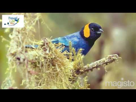 Enjoy nature in northern Peru - Birdwatching