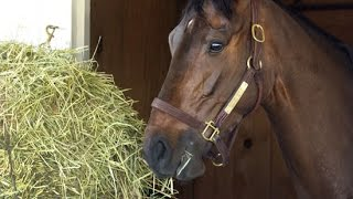 Horses Eating Hay Grass Food Grain Funny Feeding Time Tips Routine Laying Down Animals Children
