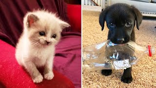 🐶 Cutest Baby Dog and Cat 😺 Cute and Funny Dog Videos Compilation #1