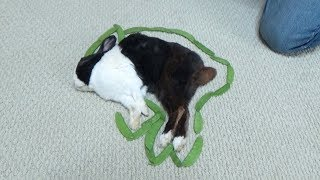 Waking a Sleeping Rabbit by Surrounding him with Peas