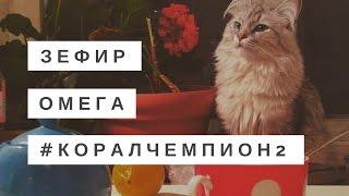 Кот есть Омегу 3/60 (Зефир)