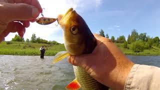 Когда голавль начинает ЖРАТЬ ! Рыбалка ШИКАРДОС!!!