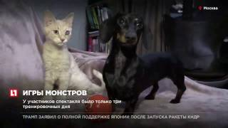 Такса помогла выходить истощенного котенка в Новороссийске