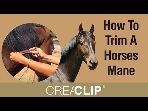 care hor horse's mane