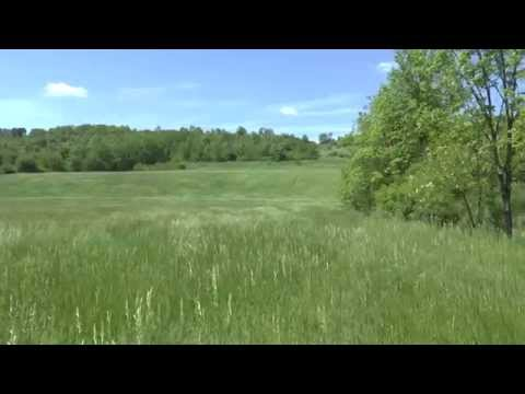 88 Acre Farm For Sale, Blair County, PA, Views Of The Land