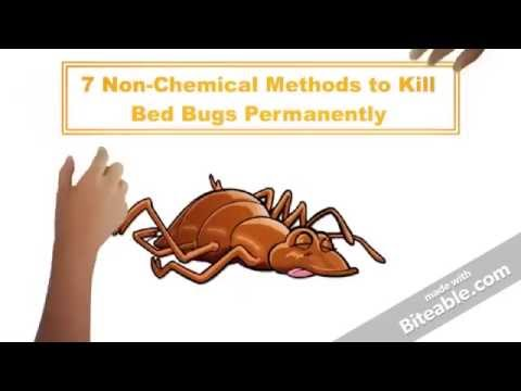 7 Non Chemical Ways To Kill Bed Bugs Permanently Youtube