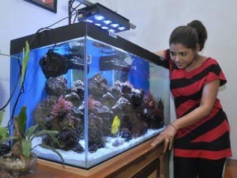 Aquarium Fish Shop In India 2018 Full Hd Video