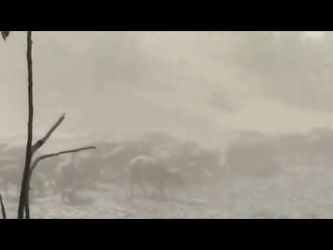 Mana Pools Buffalos in Dust