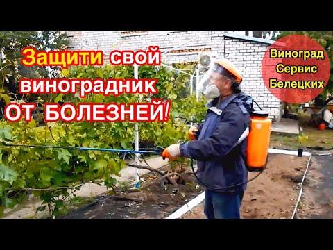 Защити  свой виноградник от болезней,если не хочешь его загубить!Важное мероприятие перед цветением!