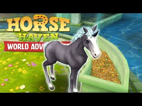One Stubborn Onyx Unicorn Foal!! • Horse Haven: World Adventures