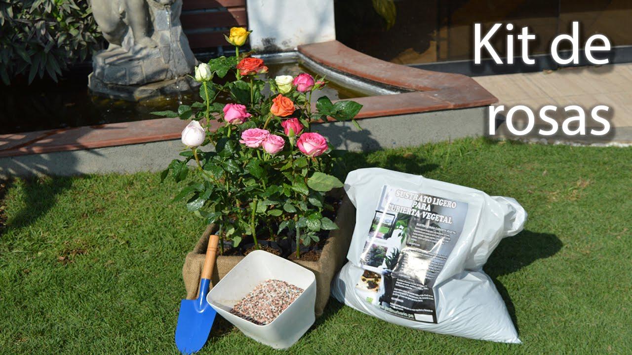 Como Sembrar Rosas En El Jardin Youtube