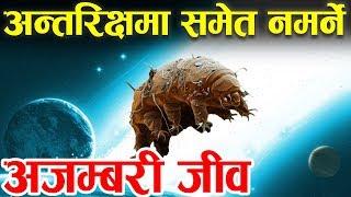 अमर जीव । Immortal Animamals  स्पेशमा पनि बाँच्छ Tardigrades: alien animals on Earth