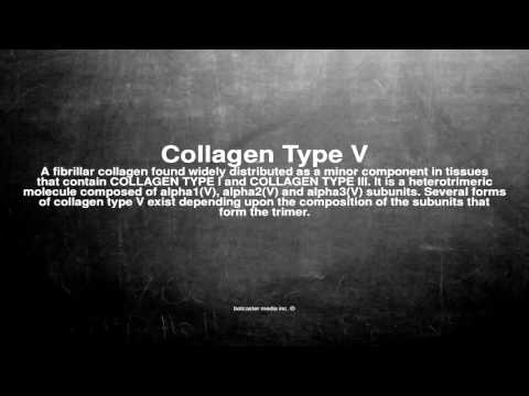 Medical vocabulary: What does Collagen Type V mean