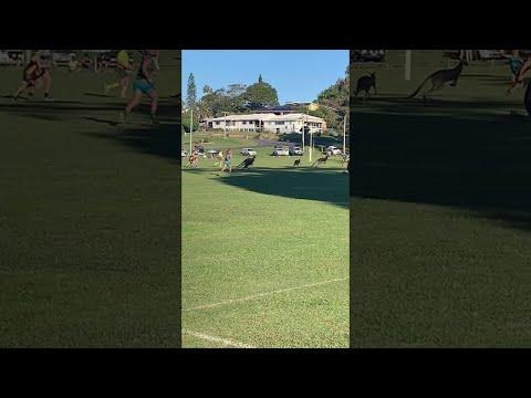 Kangaroos Crossing the Football Field || ViralHog