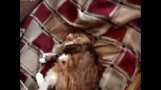 отличный способ избавления кота от блох
