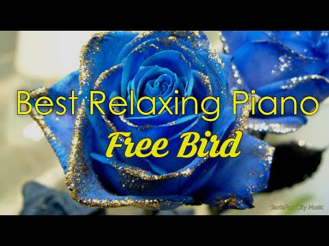 Free Bird #1 🔥 Best relaxing piano, Beautiful Piano Music | City Music