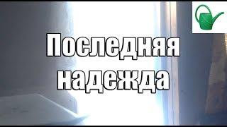 СЕРИАЛ ЛЕЙКА - Последняя надежда - Серия 4