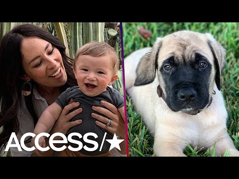 Joanna Gaines' Baby Crew Playing With His New Puppy Will Melt Your Heart