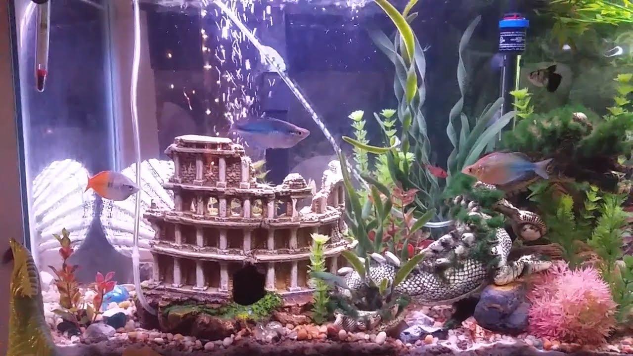 makeover of my fish tank part 1 decor 85 stand decor tank rh youtube com interior fish tank design the interior dimensions of a rectangular fish tank